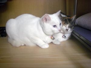 ナナとミミです